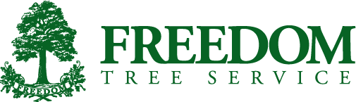 Freedom Tree Logo