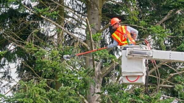 Man cabling a tree
