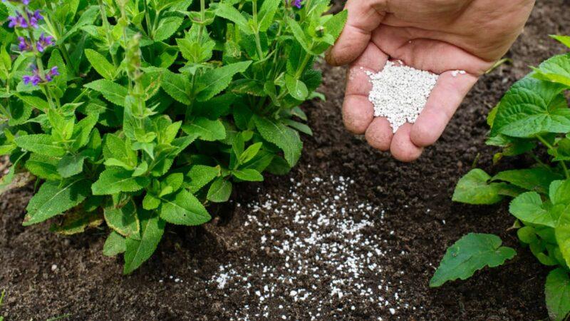 Fertilizer the soil